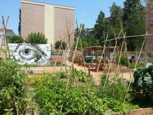 El solar Piferrer inspira l'impuls de nous horts urbans al barri com, per exemple, al carrer Pintor Alsamora. La voluntat és que el nou hort es cultivi per famílies amb membres a l'atur forçades a recórrer al Banc d'Aliments.