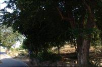 Els veïns alerten que el cablejat elèctric passa pel mig dels arbres sense podar, i hi ha un alt risc d'incendi. / Joan Aleix Mata