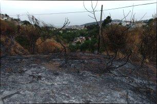L'incendi va arribar a escassos metres de la urbanització. A la foto es pot observar com els pals elèctrics passen pel mig dels arbres. / Joan Aleix Mata